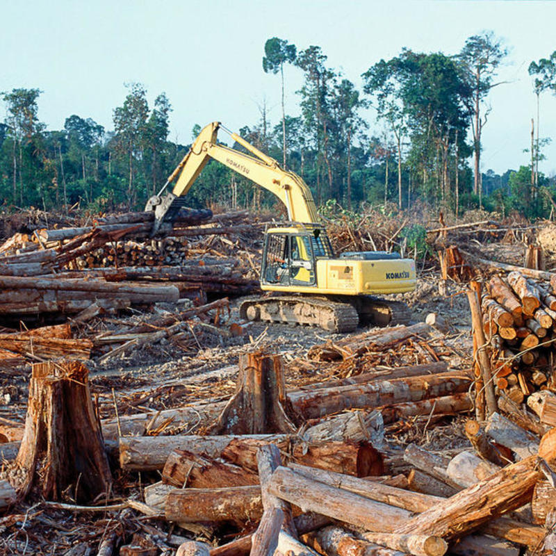 Bulldozer among fallen trees.